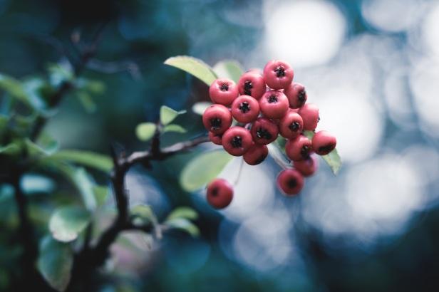 berry-2892726